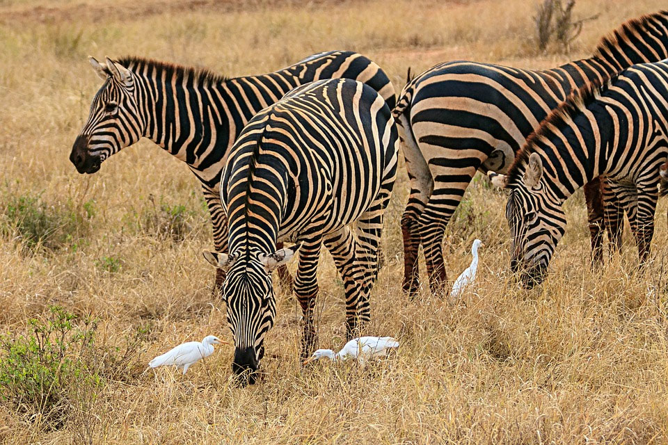 Africa Kenya Amboseli National Park