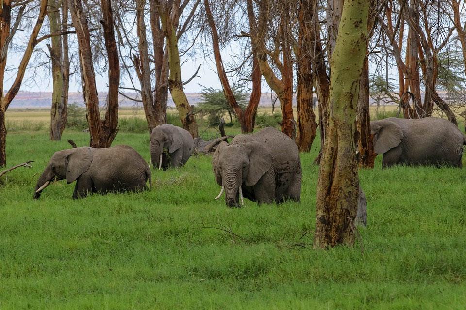 Africa Kenya Amboseli Safari