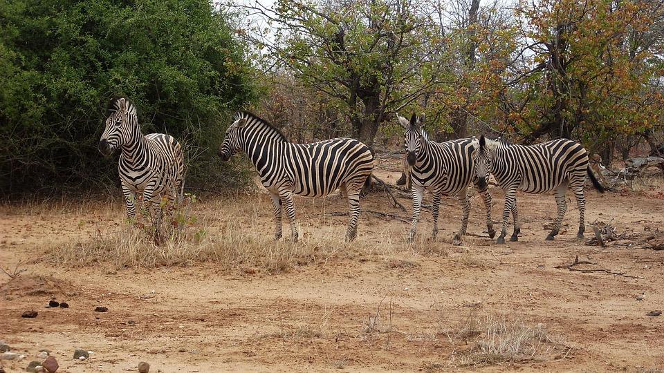 Africa National Parks