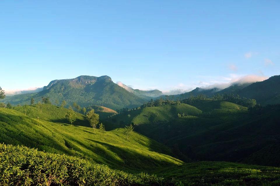 India Kerala Munnar