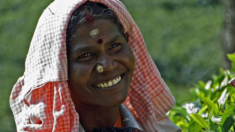 Tea Plucker in Munnar India