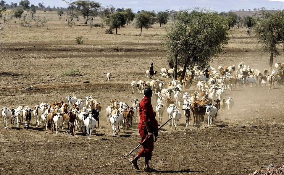 Tanzania Maasai Herdsman Serengeti