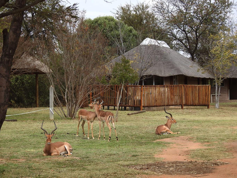 SunEden Naturist Resort Wildlife