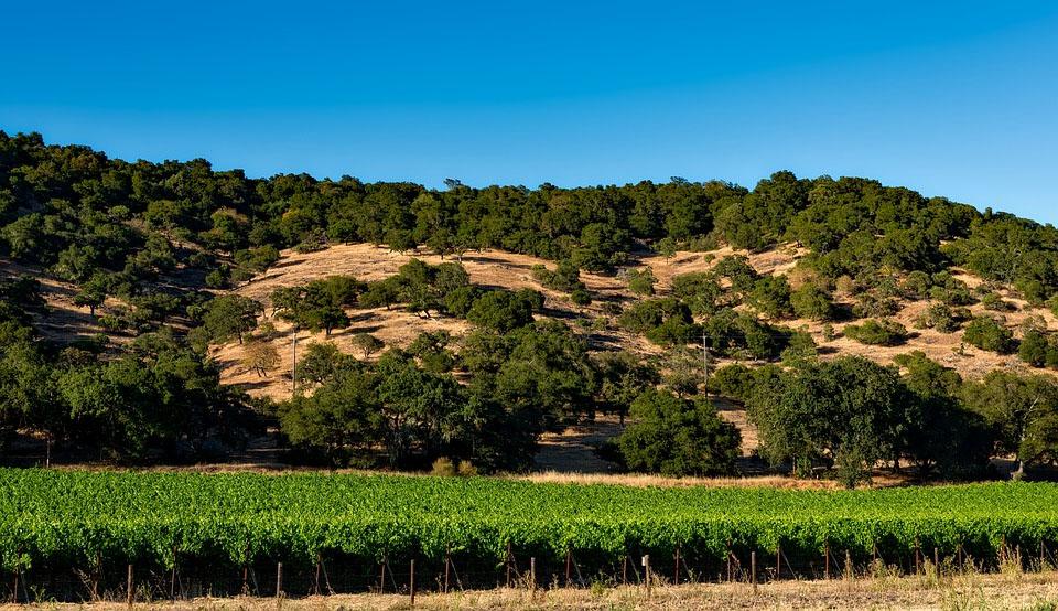 California Napa Wine Country